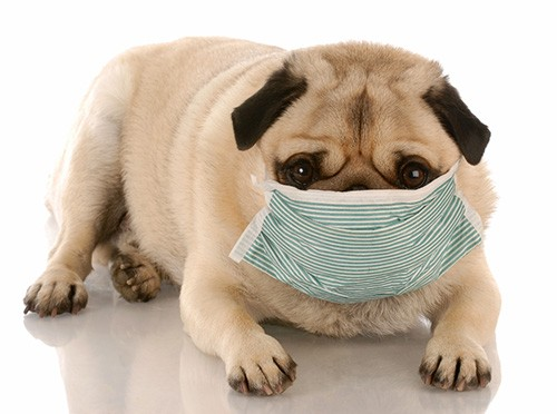 Masked-Dog-Sick-Small